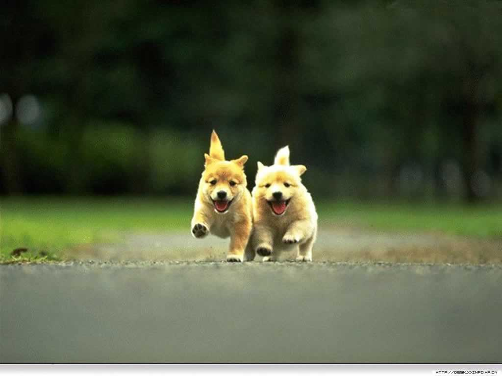 Group Of Cute Dog Running Wallpapers